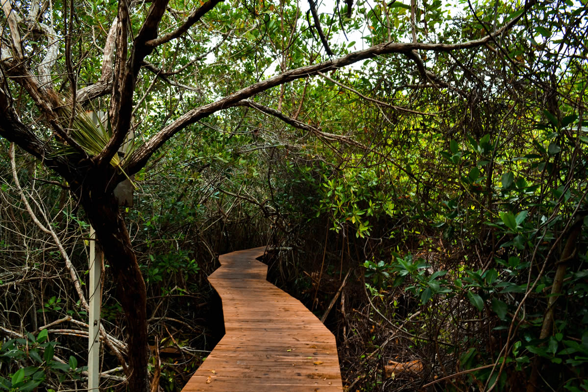 mangrove,santuary,xcacel,playa