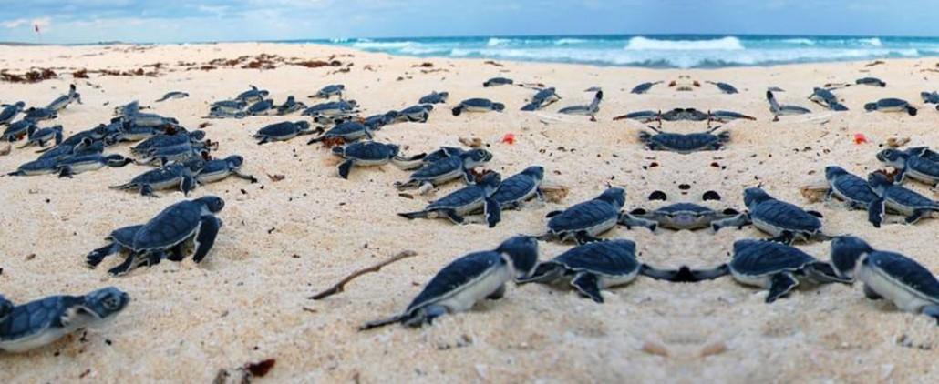 beach,paradise,mexico,caribe,